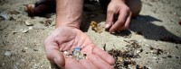 Purpurina encontrada nos oceanos | Fonte: Pedra Ambiental